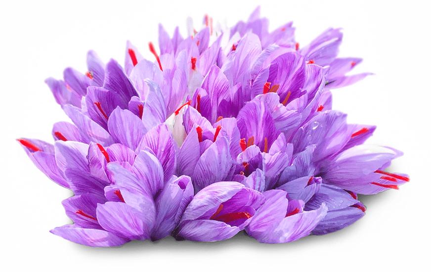 original saffron